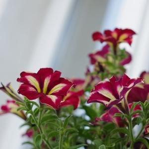 Zo záhradky