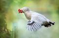 Aj sliepky vedia lietať