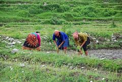 NEPAL_POKHARA_Sarangot002