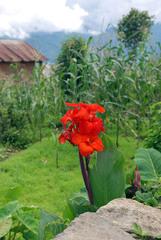 NEPAL_POKHARA_Sarangot027