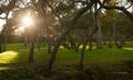 zahrada rajskych poteseni