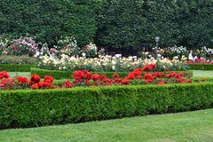pestrosť kvetov v záhrade