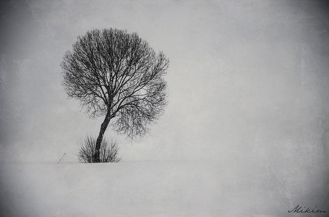 Osamotený strom