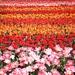 Taky obycajny kvetinovy zahon