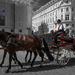 Kone v meste