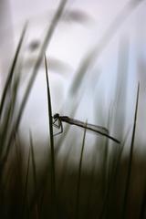Ticho v trave