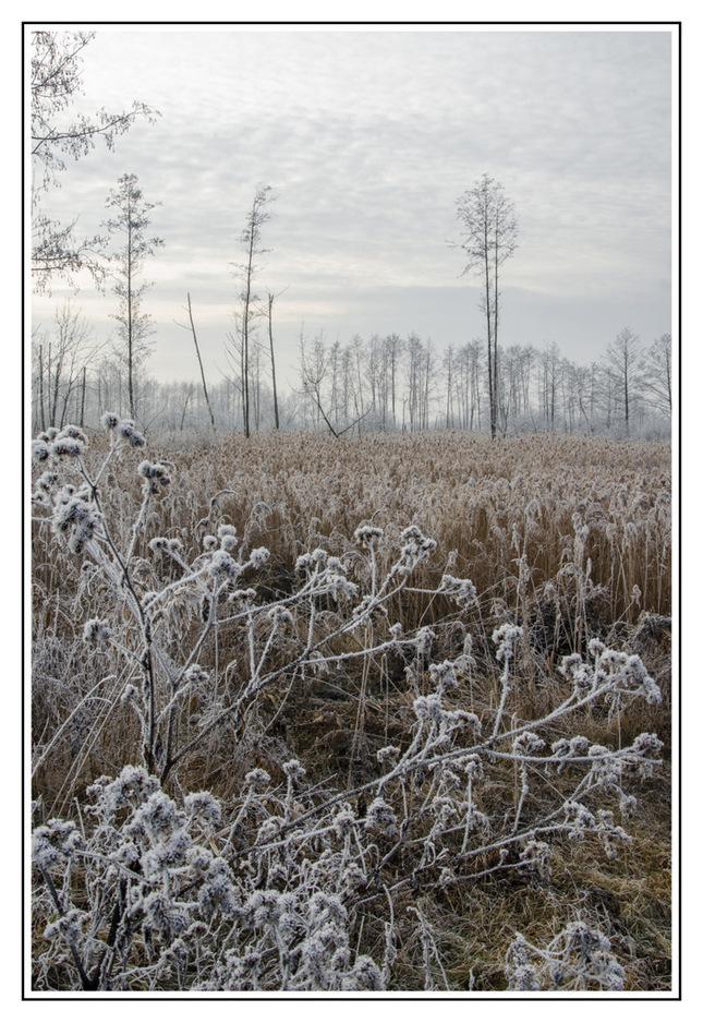 Zima 2013 (1)