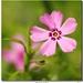 Mravec a kvet