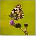 Motýl a pavúk