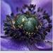 Detail kvetu
