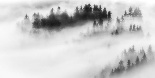 White Winds