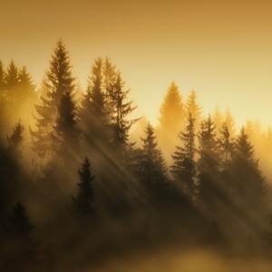 Jedno zlaté ráno
