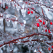 Zamrznuté vianočné ráno
