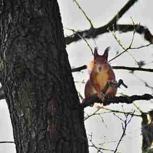 Zvedavá veverička