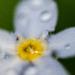 Velky maly kvet