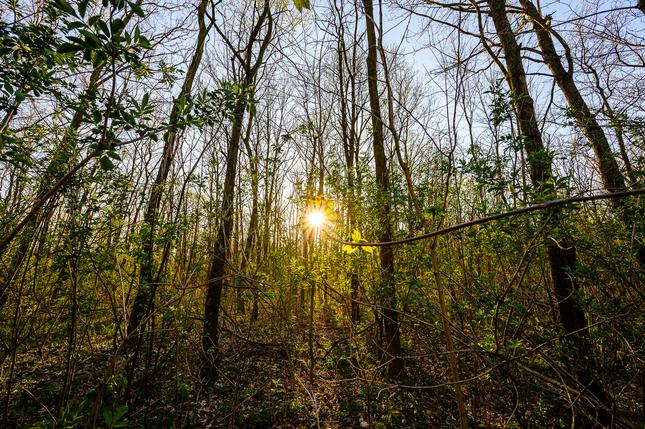 Lesné svetlo