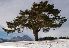 stojí strom zelený