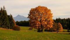 Pod Kriváňom javorová jeseň