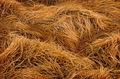 Vysušená tráva