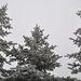 zamrznute stromy