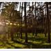západ v lesíku