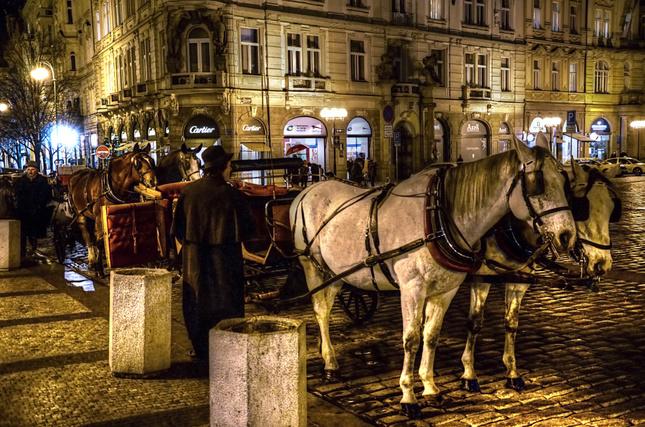 Pražské kone