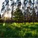 západ pri krmelci v lesíku
