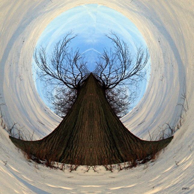 strom s parohamy