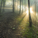 Keď ráno cez hmlu svieti ...