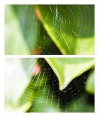 pavučina lží :)