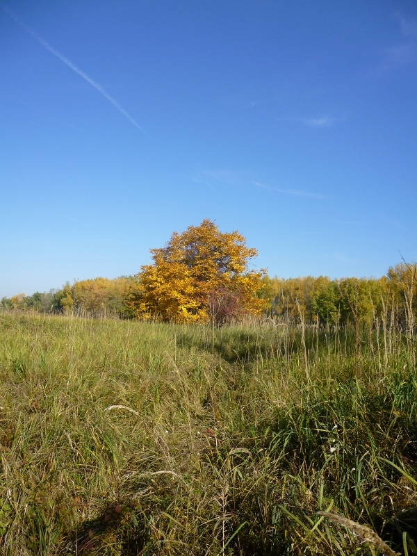 strom v jesenných farbách