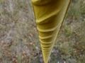 žltý spád