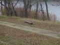 lavička opustená