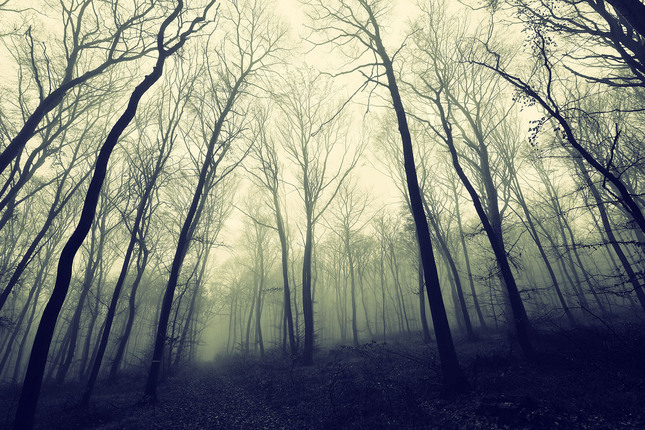 Temny les
