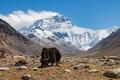 Na paši pod Everestom