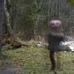 Duch pri potoku