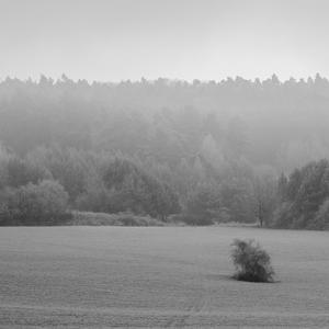 Zima pri lese