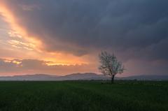 sama v poli pred búrkou