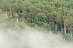 Zahaľujúc les