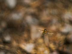 Hmyzáček