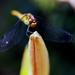 kraska na kvete