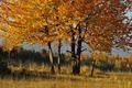 jeseň nad Bystricou