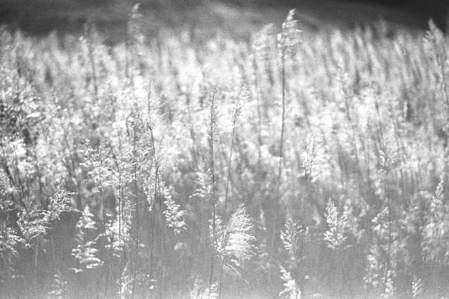 tanec tráv