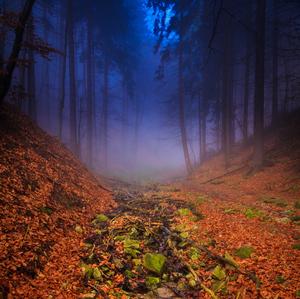 Lesnou cestičkou...3