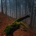 Tajomný les...3
