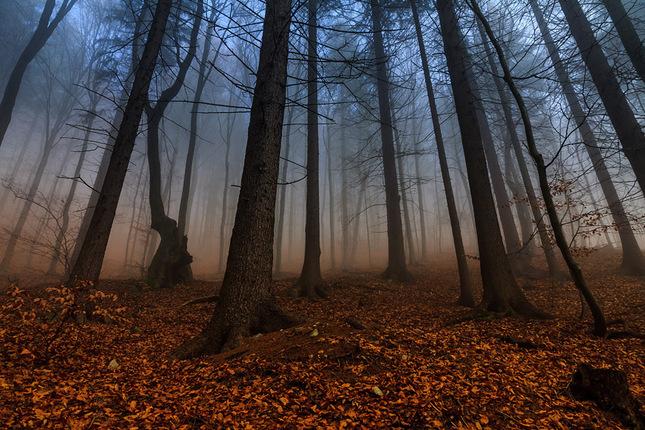Tajomný les...4