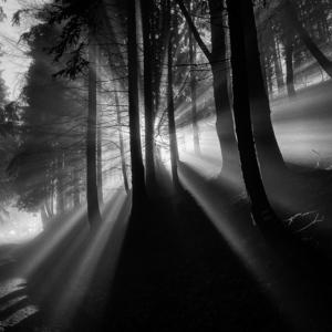 Za svetlom...