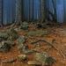 Tajomný les...