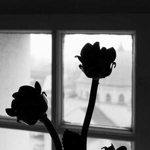 Ruže.