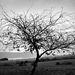 smutný strom